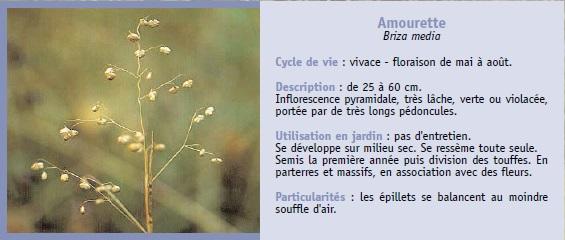 Plantes sauvages for Catalogue de plantes
