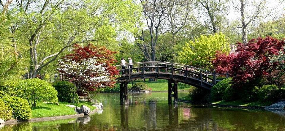 Cophyto 2018 for Estanques japoneses jardin